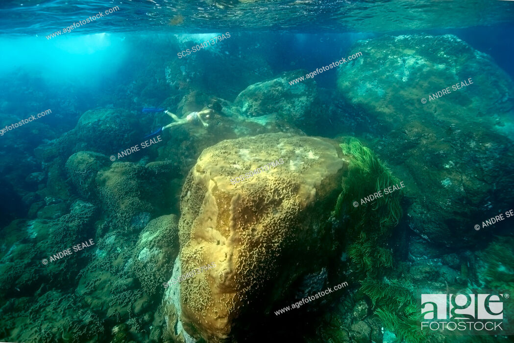 Stock Photo: Snorkeler dives down to observe the substrate, St Peter and St Paul's rocks, Brazil, Atlantic Ocean.