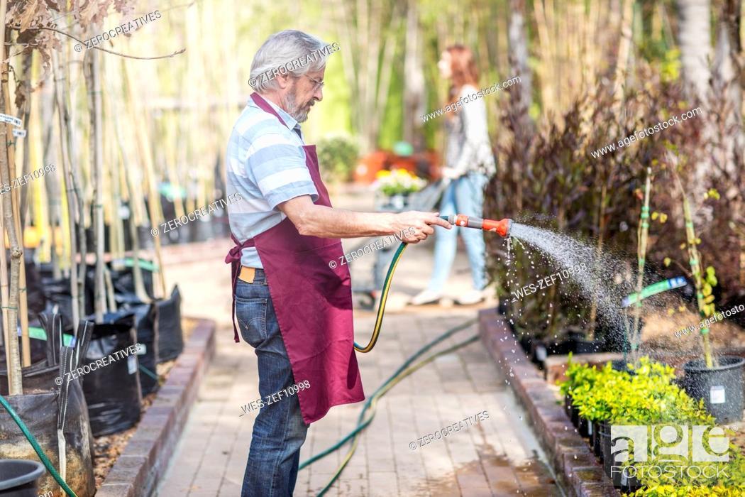 Imagen: Elderly gardener watering plants in garden centre.