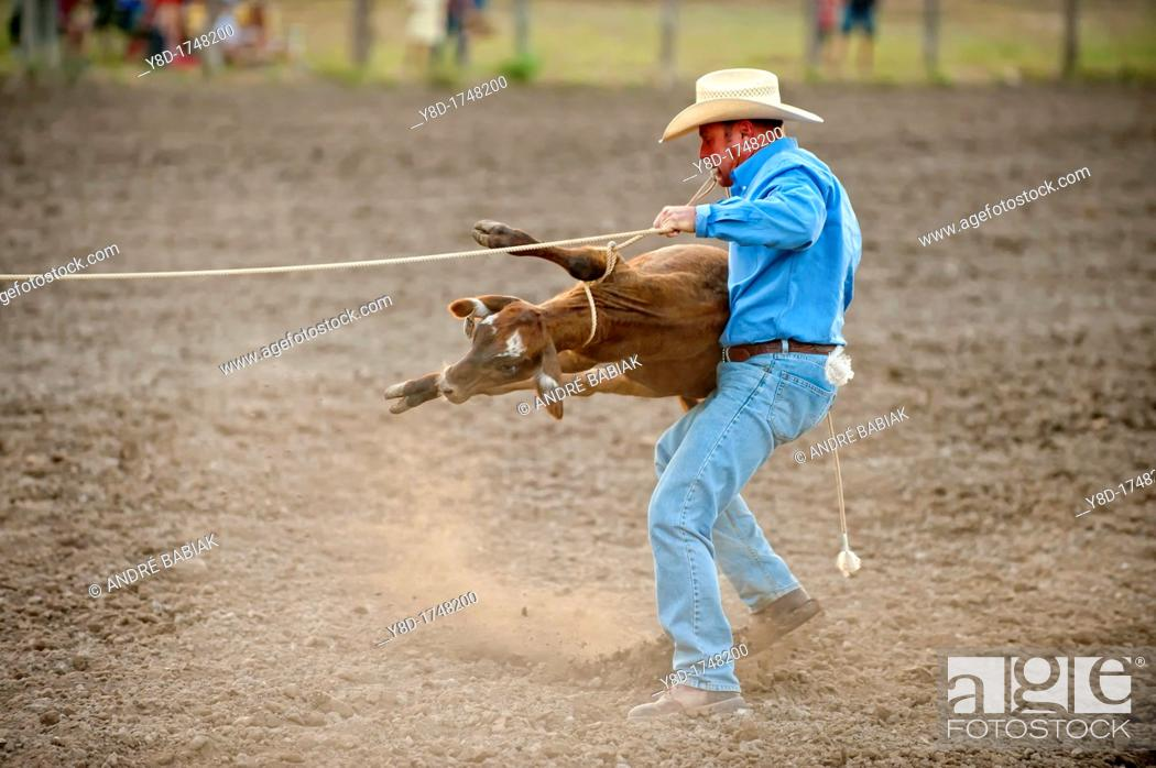 Stock Photo: Calf roping action at small town rodeo shown in Leakey, Texas, USA.