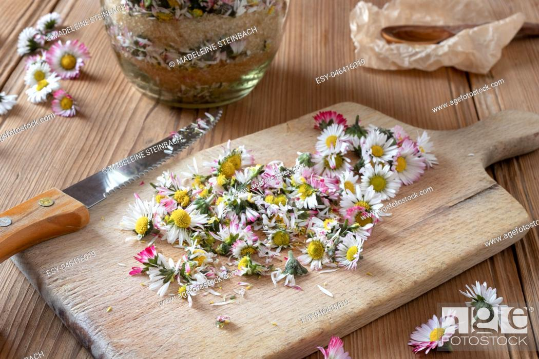 Stock Photo: Cutting up daisy flowers to prepare homemade herbal syrup against cough.