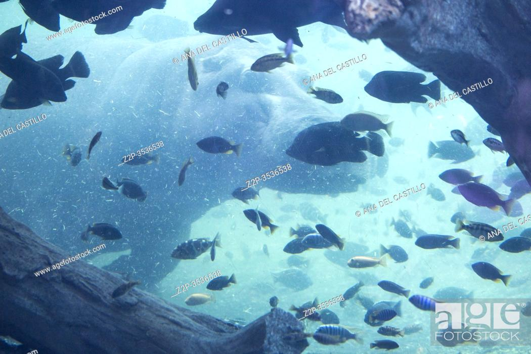 Stock Photo: Fish tank in Valencia Spain.