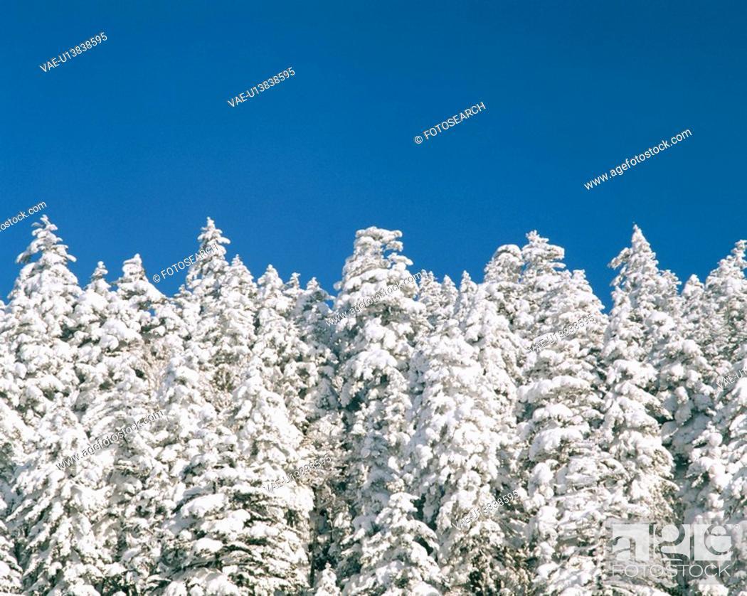 Stock Photo: Rime on trees.