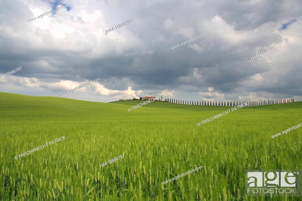 Stock Photo: Italy, Europe, Tuscany, Toscana, hills, hill, scenery, landscape, nature, landscape, grain-fields, cornfields, cypress.