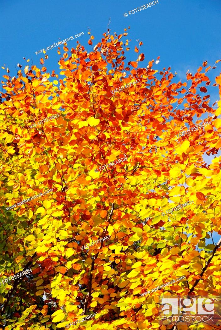 Stock Photo: discolored, blue, colored, branches, branch, flims, autumn.