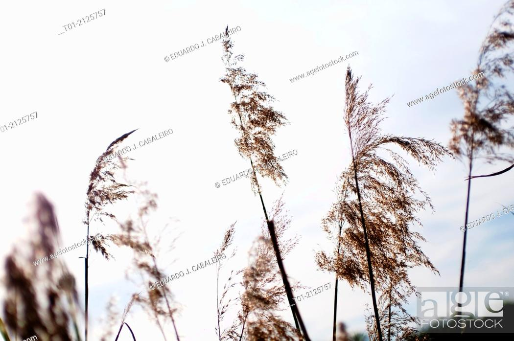 Stock Photo: branches in the wind.