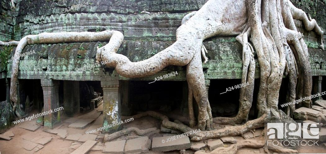 Stock Photo: Cambodia-No  2009 Siem Reap City Angkor Temples W H  Ta Prohm Temple.