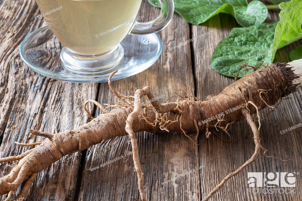 Stock Photo: Burdock roots on a table with herbal tea in the background.