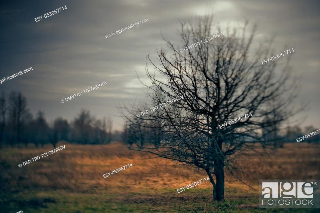 Stock Photo: Spooky Halloween landscape with wild nature and old dead tree.