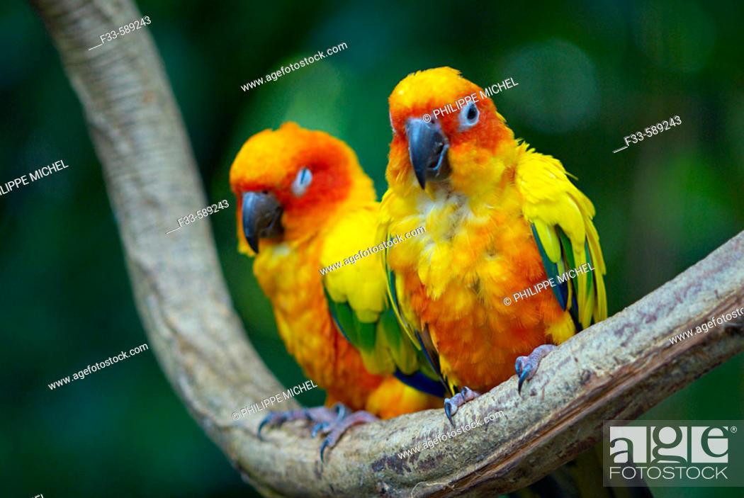 Stock Photo: Zoo. Singapore.