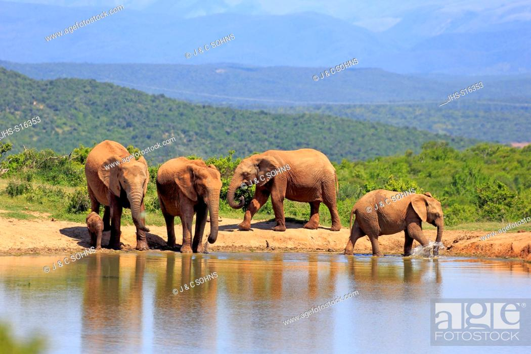 Stock Photo: African Elephant, (Loxodonta africana), herd with young at waterhole, Addo Elephant Nationalpark, Eastern Cape, South Africa, Africa.