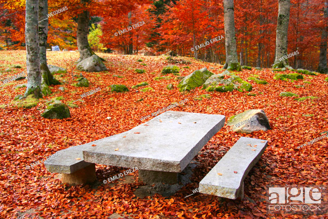 Stock Photo: Picnic area in beechwood. Pyrenees Mountains region, Alta Ribagorça. Catalonia, Spain.
