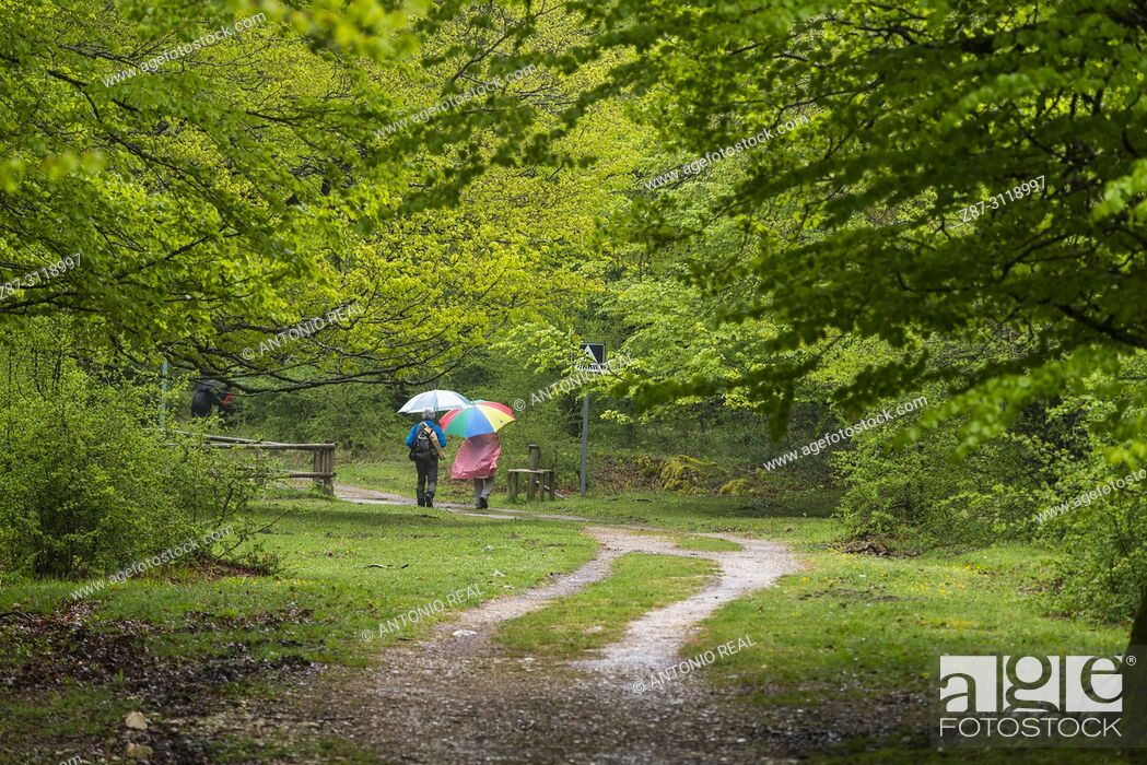 Stock Photo: People walking in a beech wood. Parque Natural Sierra de Urbasa. Navarra. Spain.