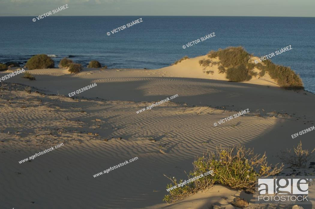 Stock Photo: Corralejo dunes. La Oliva. Fuerteventura. Canary Islands. Spain.