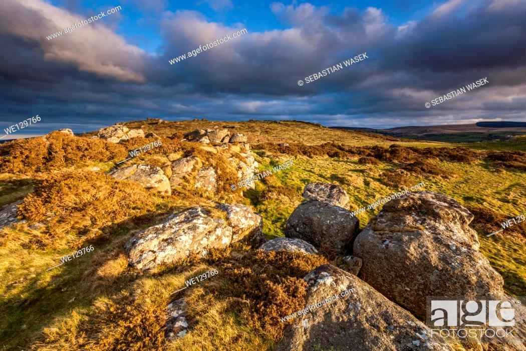 Stock Photo: Meldon Hill, Dartmoor National Park, Chagford, West Devon, England, UK, Europe.
