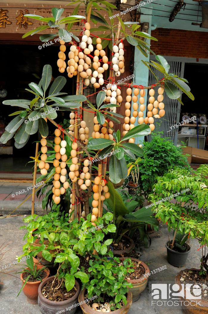 Stock Photo: egg shells stringed together and hanged on plants for good luck, bangkok chinatown, bangkok, Thailand.