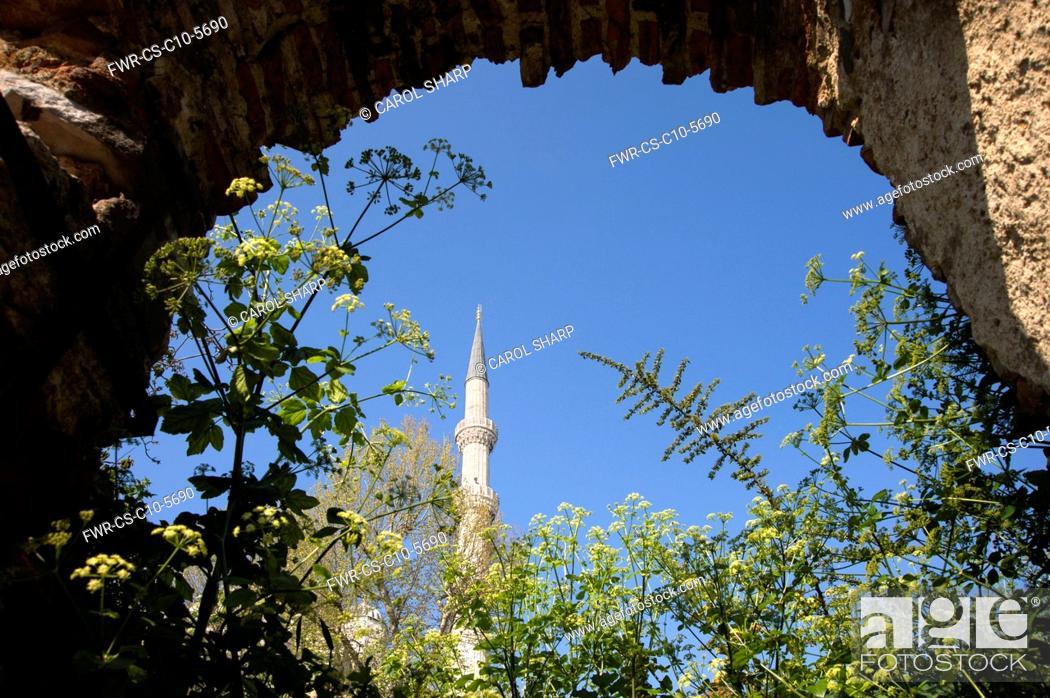 Imagen: Alexanders, Smyrnium olusatrum, Flowering stems growing under an arch with minaret of a mosque against the blue sky behind.