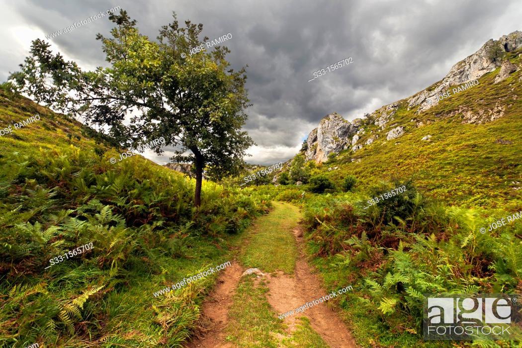 Stock Photo: The Arredondas road in Brez  Cordillera Cantábrica  Santander  Cantabria  Spain.