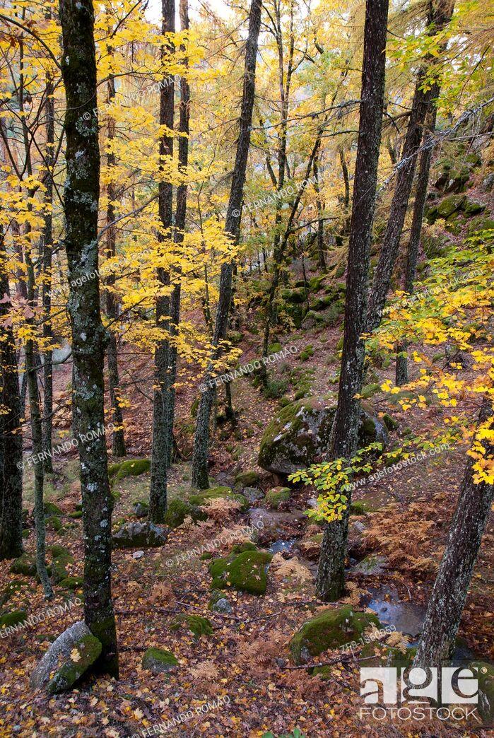 Imagen: Forest at Estrela Mountain Natural Park, Portugal.