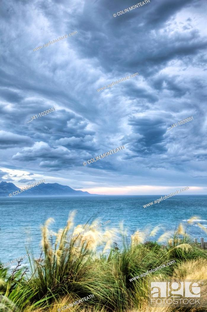 Stock Photo: Pampas grass blowing in strong wind, NW storm clouds overhead, Kaikoura, New Zealand.