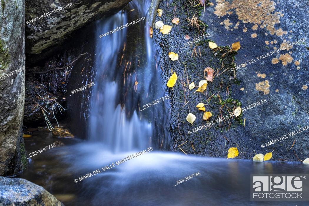 Stock Photo: Autumn in the Sestil stream in Canencia Birch. Sierra de Guadarrama. Madrid. Spain. Europe.