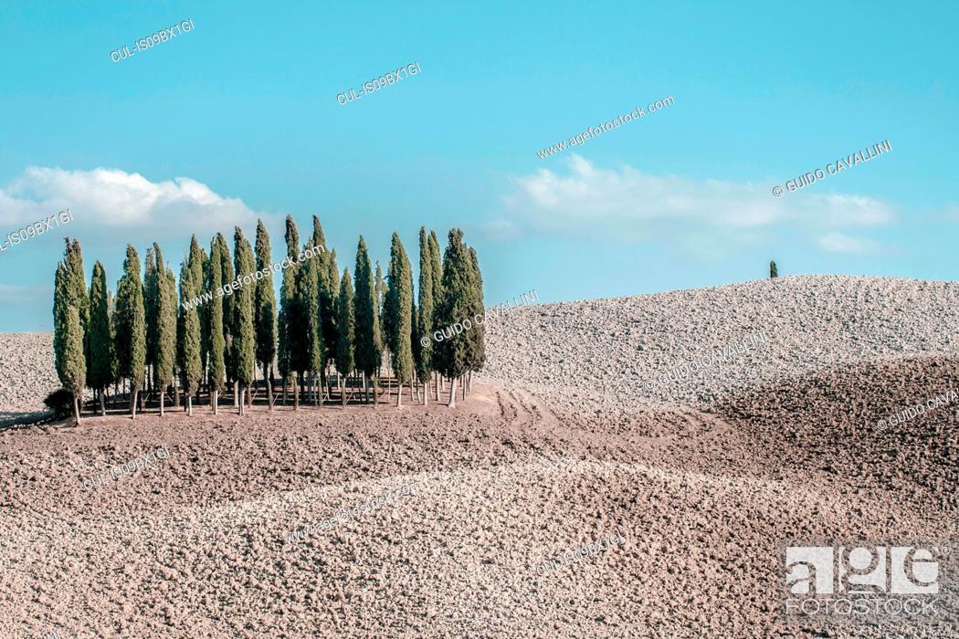 Stock Photo: Countryside in Tuscany, Italy.
