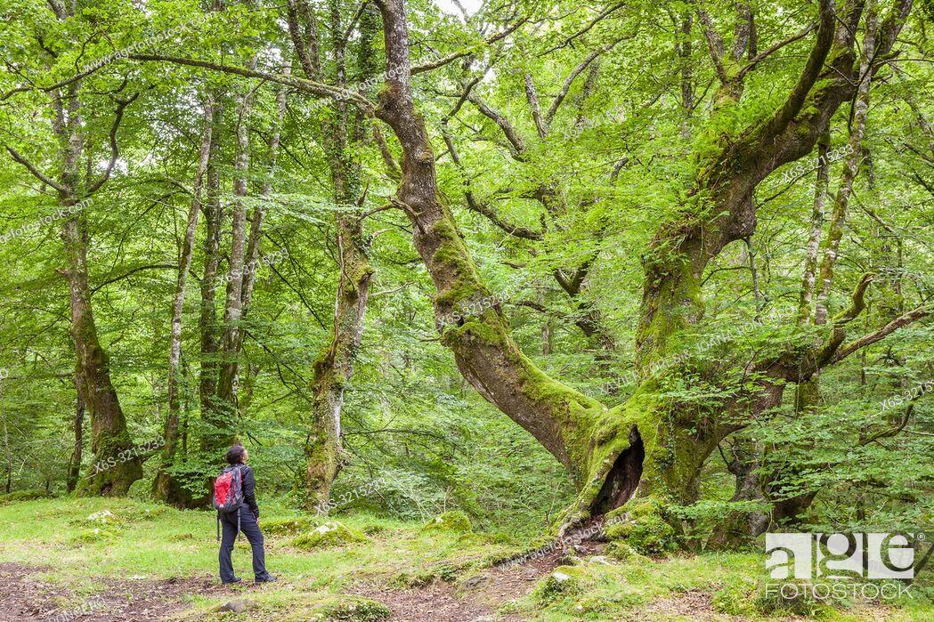 Stock Photo: Natural Park of Saja-Besaya, Cantabria, Spain.