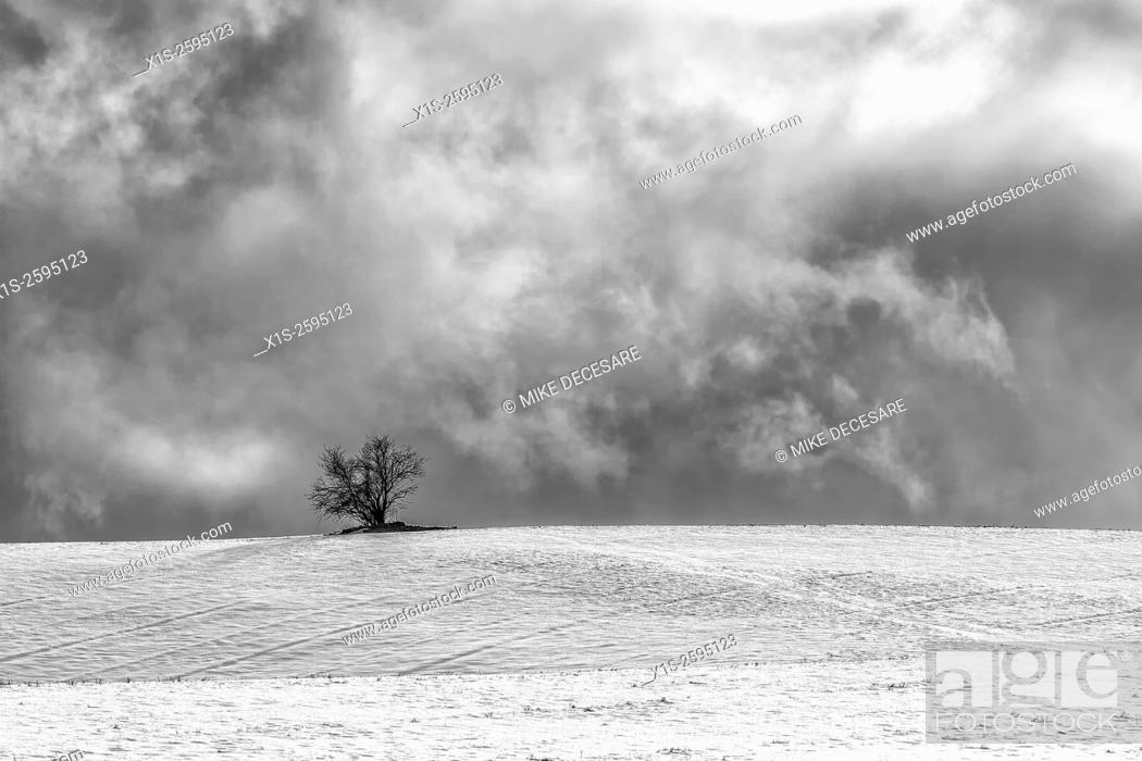 Stock Photo: A single tree sits atop a snow covered field on a cold, winter day.