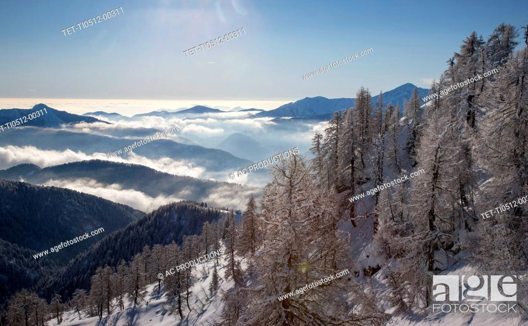 Stock Photo: Bare trees and snow on mountain in Piedmont, Italy.