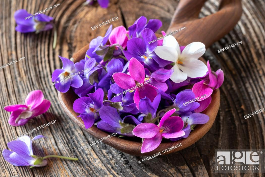 Stock Photo: Wood violet flowers on a wooden spoon.
