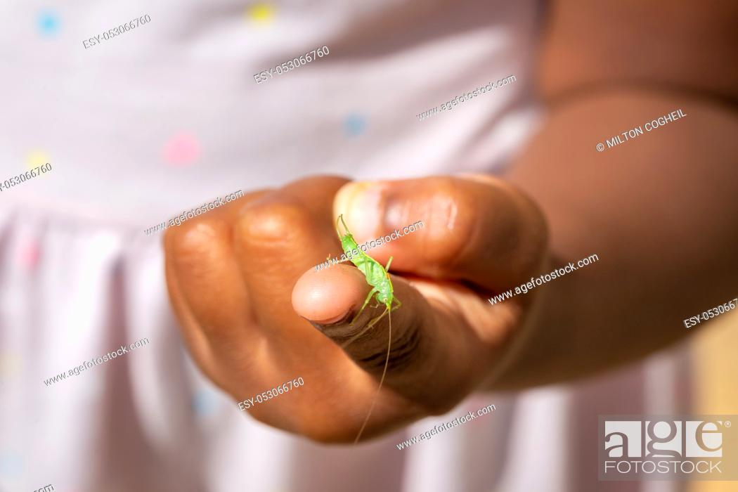 Stock Photo: Single male Meconema thalassinum, known as the oak bush-cricket or drumming katydid, on a child's finger.
