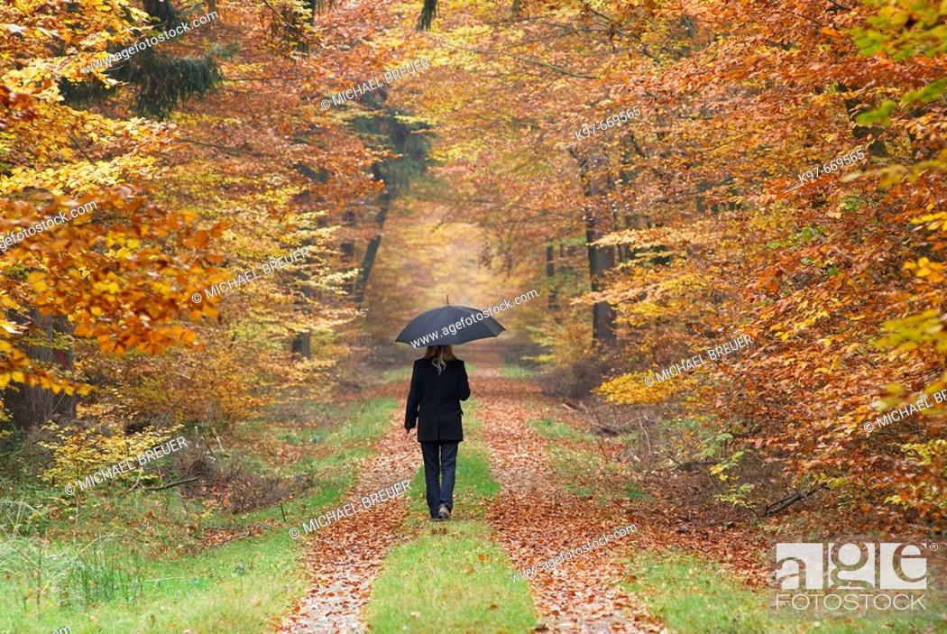 Stock Photo: Woman with umbrella on path in forest, beech trees, autumn, Germany.