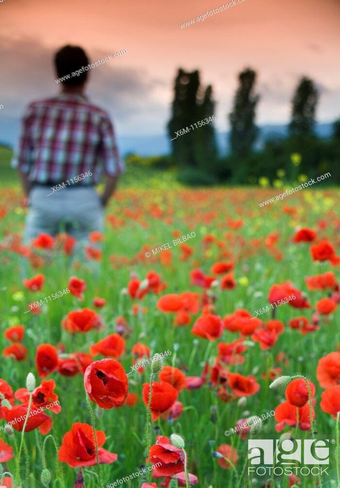 Stock Photo: Man watching storm clouds on a poppy field Papaver rhoeas  Ayegui, Navarre, Spain, Europe.