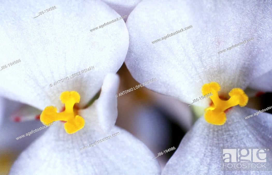 Stock Photo: Flower stamens.