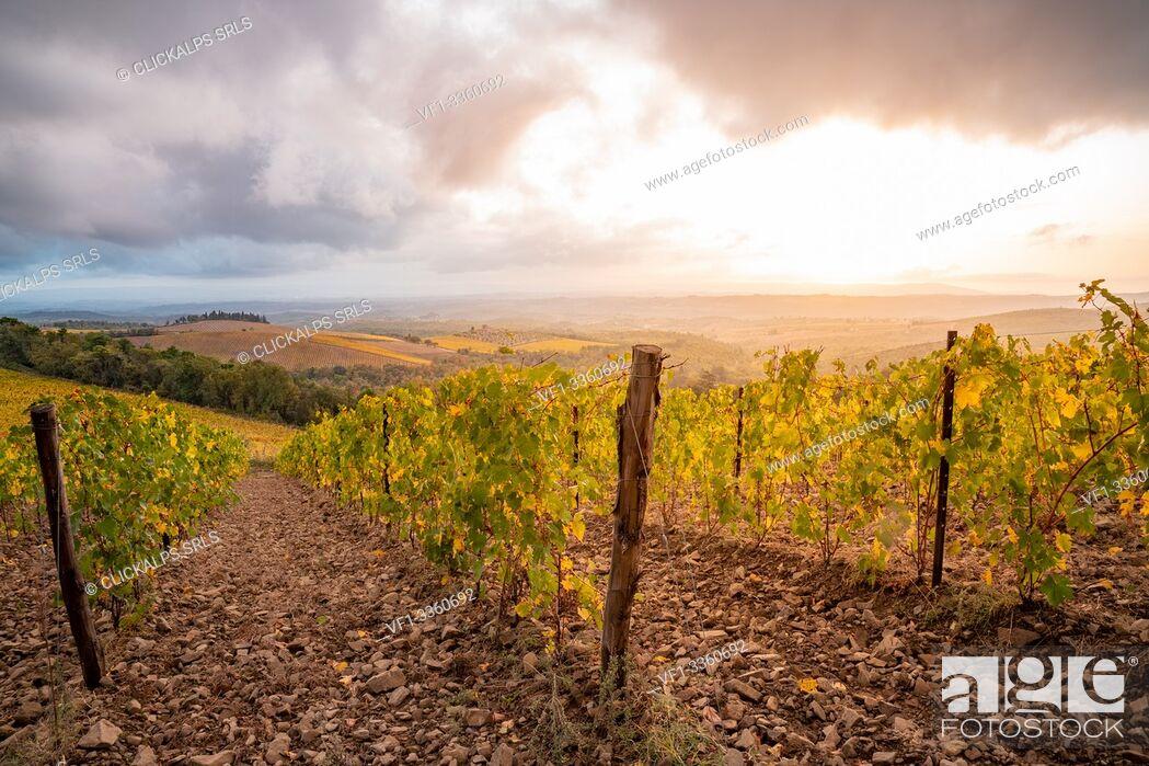 Stock Photo: Chianti Region, Tuscany, Italy. Vineyards in autumn at sunset.