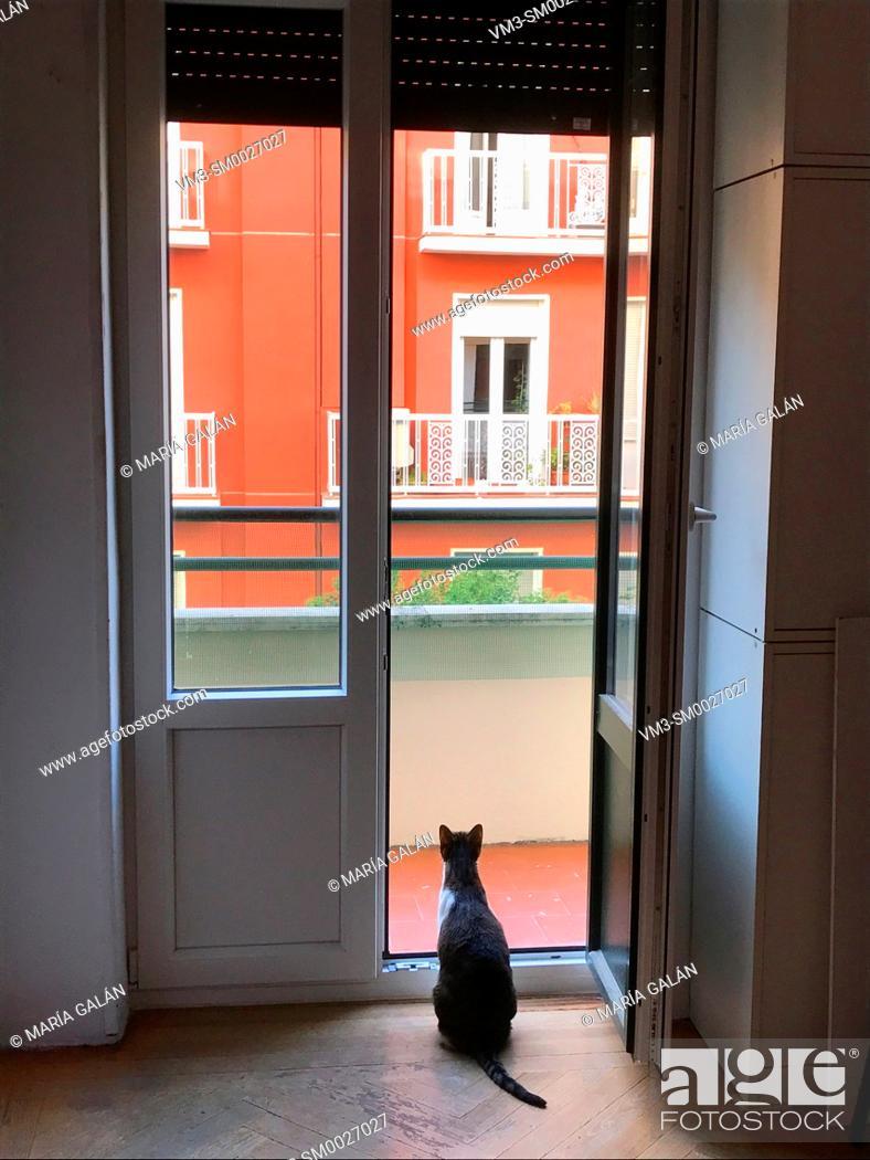 Stock Photo: Cat at home, looking through an open door.
