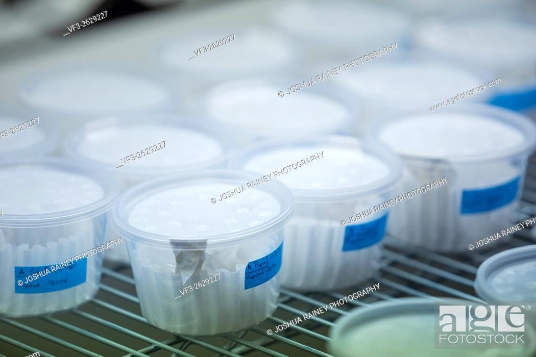 Stock Photo: Sample dishes with gmo experiments at a science lab in California.