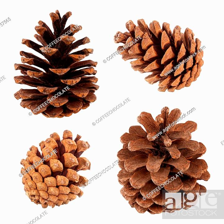 Stock Photo: Set of cones of coniferous trees isolated on white.