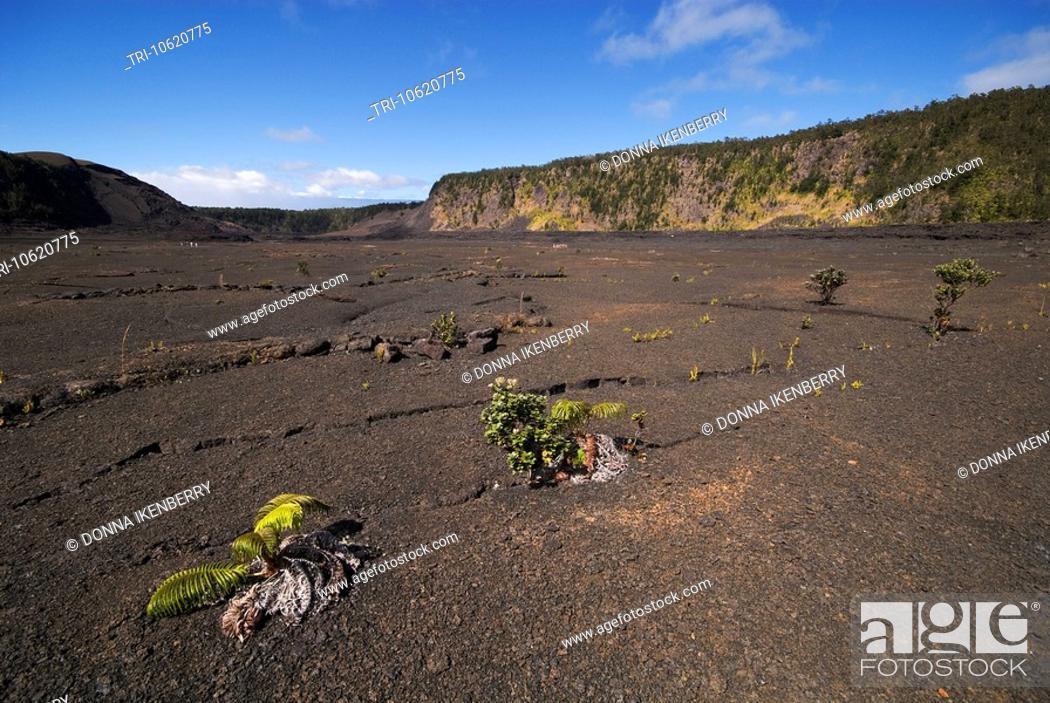 Stock Photo: Kilauea Iki Crater Hawaii Volcanoes National Park Hawaii USA.