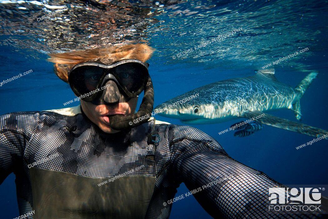 Imagen: Diver, blue shark in background, South Cork, Ireland.