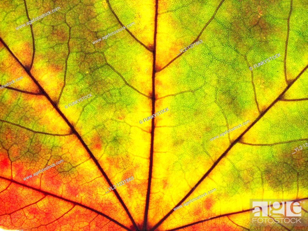 Stock Photo: Autumn leaf  Single fall leaf against white  Natural colors and textures.