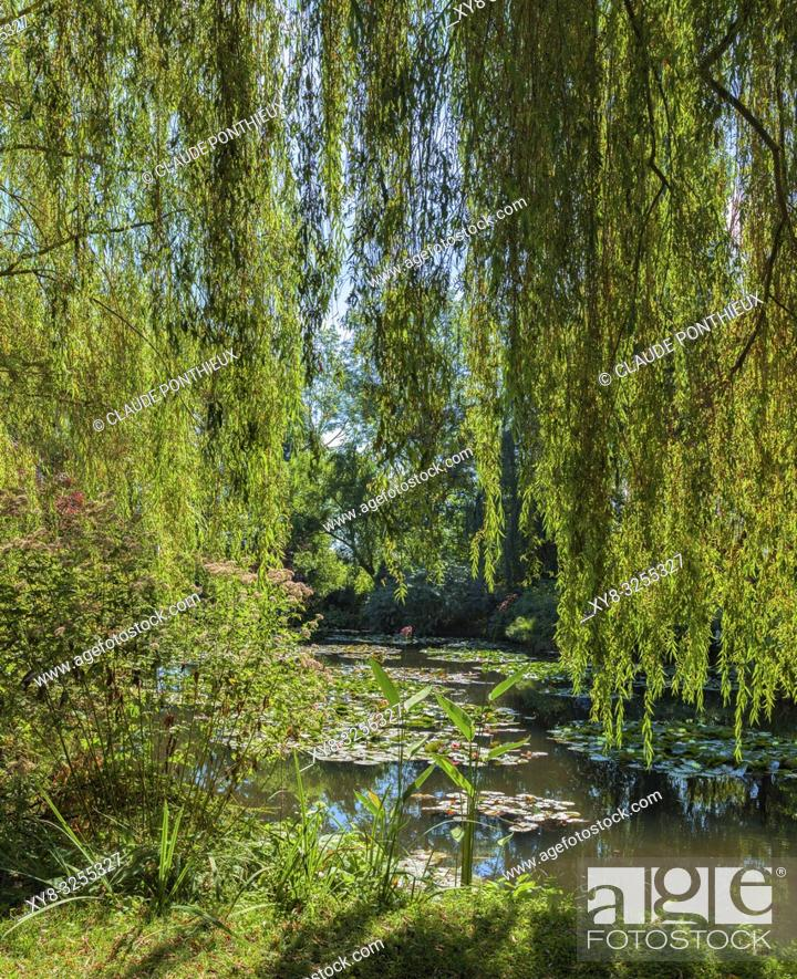 Stock Photo: Weeping willows, Giverny Gardens; Normandy; France.