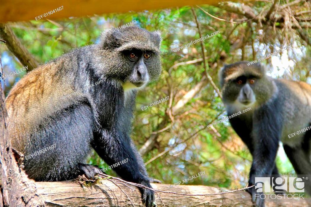 Stock Photo: baboon in tanzania.