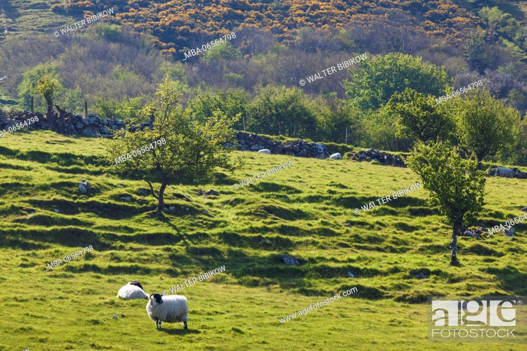 Stock Photo: UK, Northern Ireland, County Antrim, Carnlough, countryside.