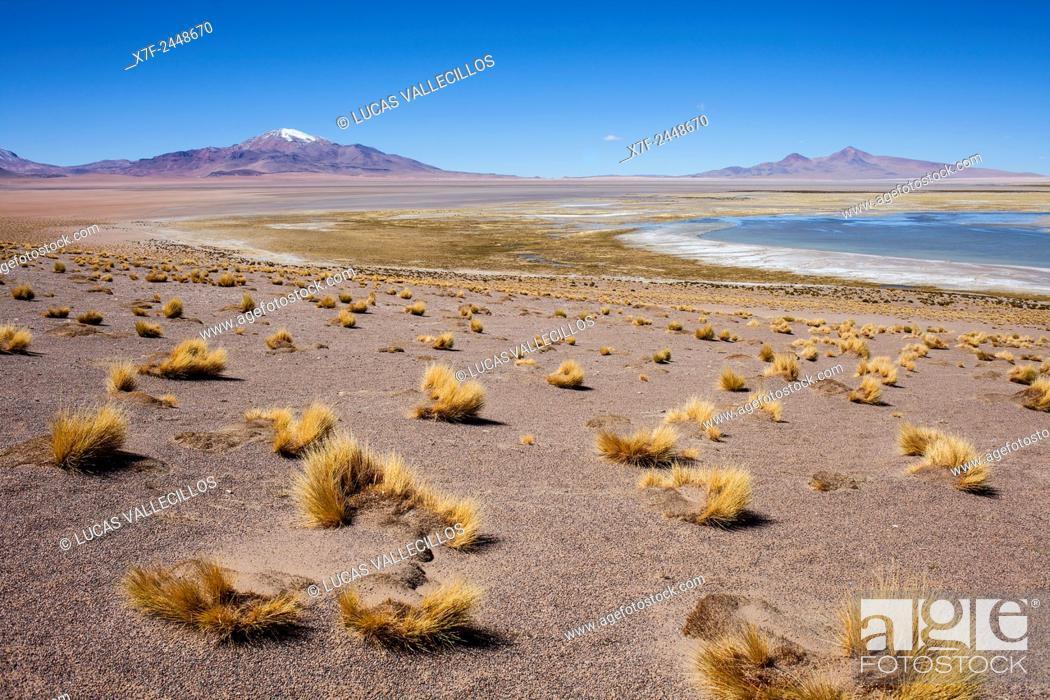 Stock Photo: Salar de Tara, Altiplano, Puna, Atacama desert. Region de Antofagasta. Chile.