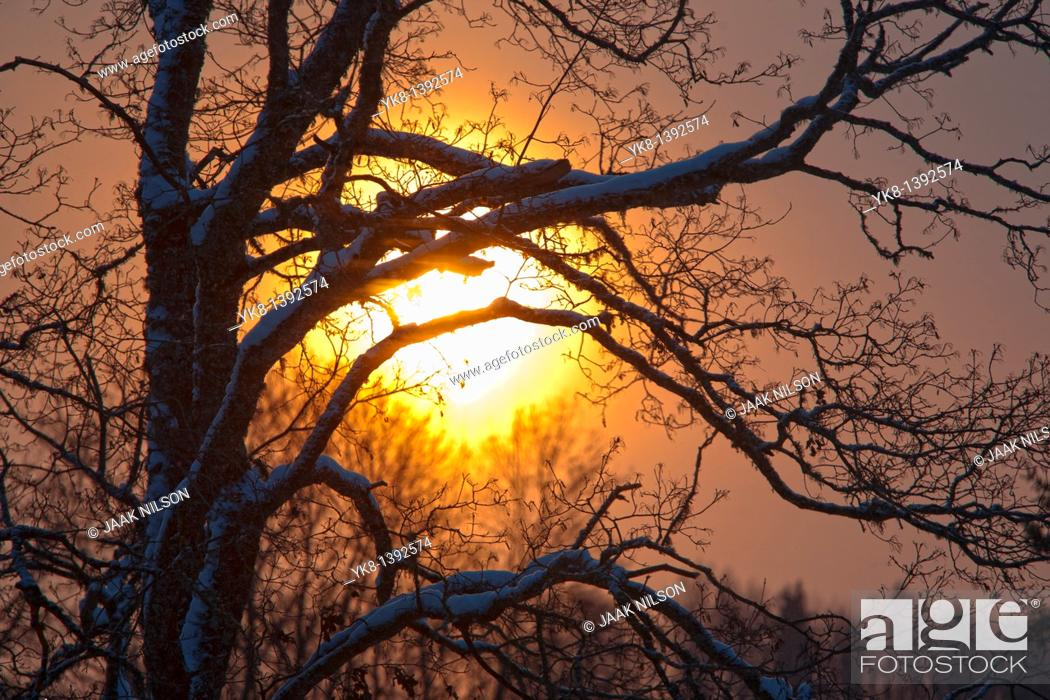 Stock Photo: Tree Branches Silhouette against Sun.