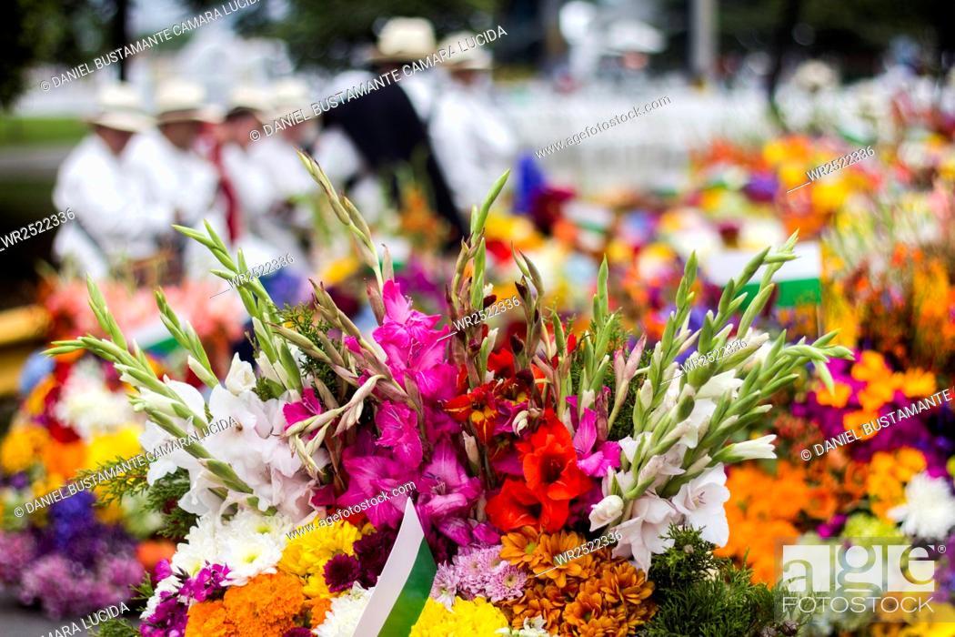Imagen: Desfile de Silleteros, Feria de las Flores.