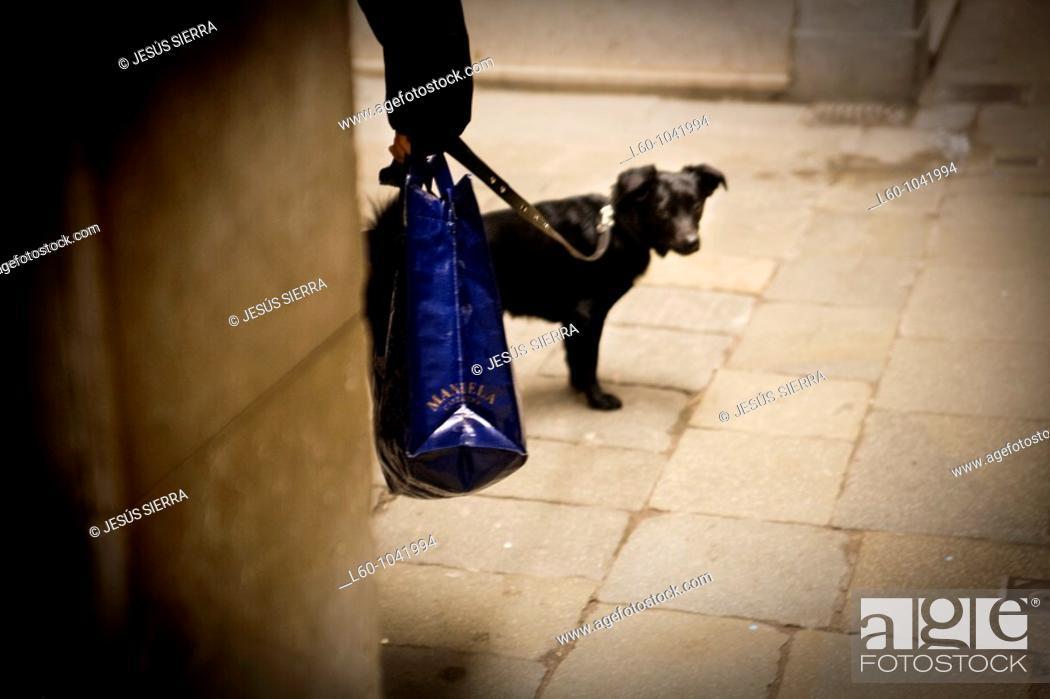 Stock Photo: Dog in Venice, Italy.