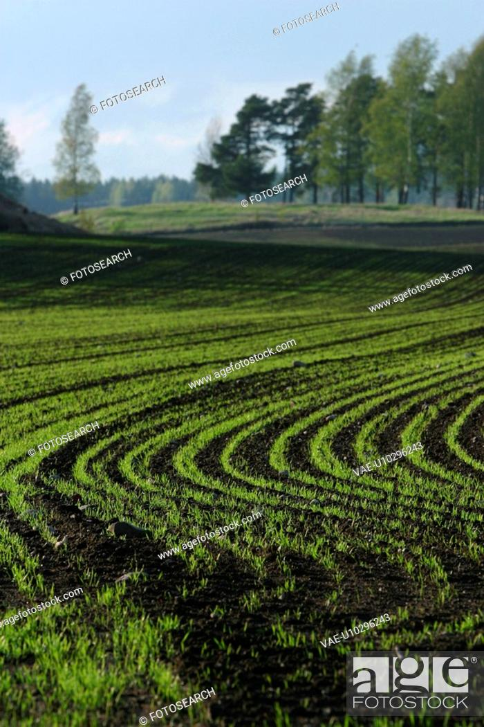 Stock Photo: outdoors, natural, season, farm, farming, field.