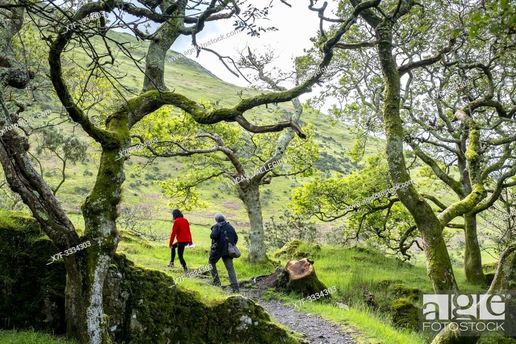 Stock Photo: Way to Castell y Bere, Dysynni Valley, Gwynedd, Wales.