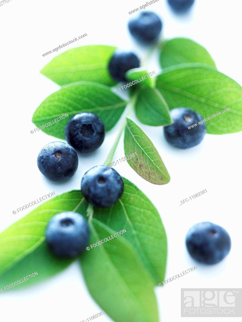 Stock Photo: Blueberries on a sprig.